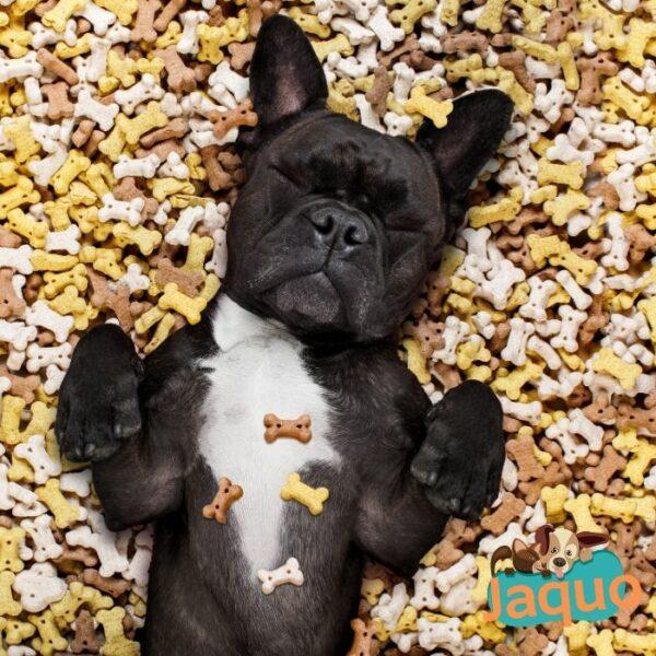 Friandises en croquettes pour éduquer son chien