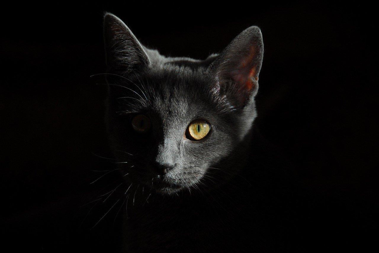 cat, animals, cats