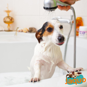 shampoing-anti-démengeaison-jaquo